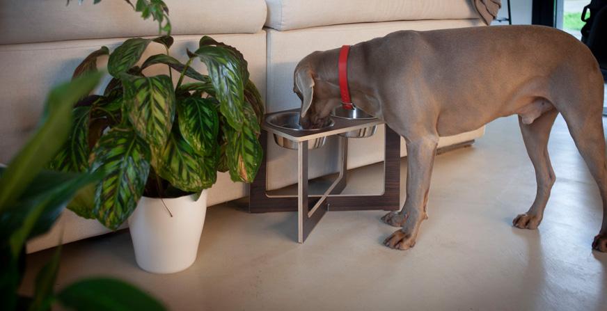 Comedero DYRE. Los comederos altos para perros pasan a una nueva dimensión - Blog - Hanniko Design