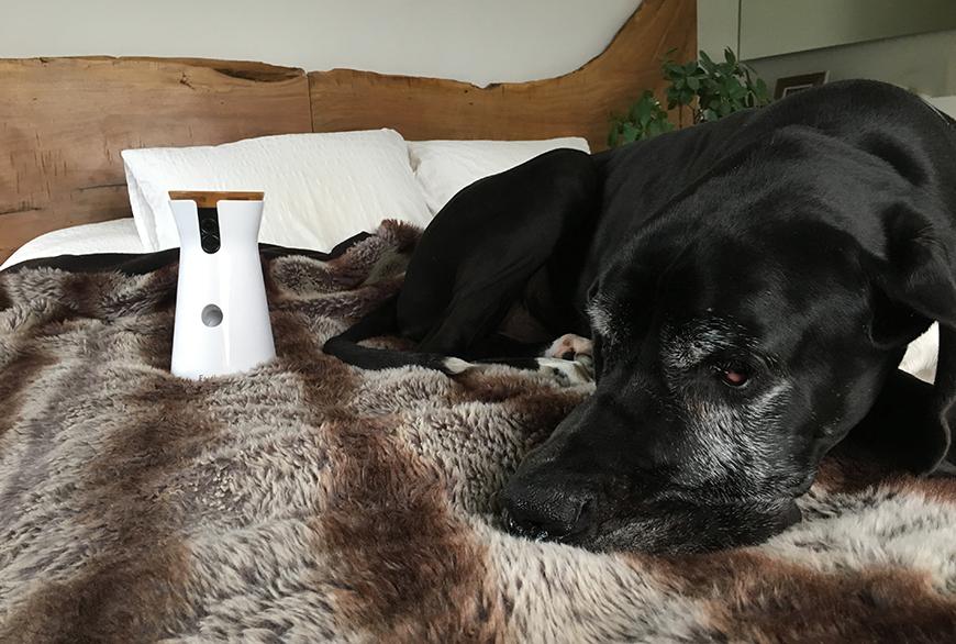 ¿Qué hacen nuestros perros cuando se quedan solos en casa? - Blog - Hanniko Design