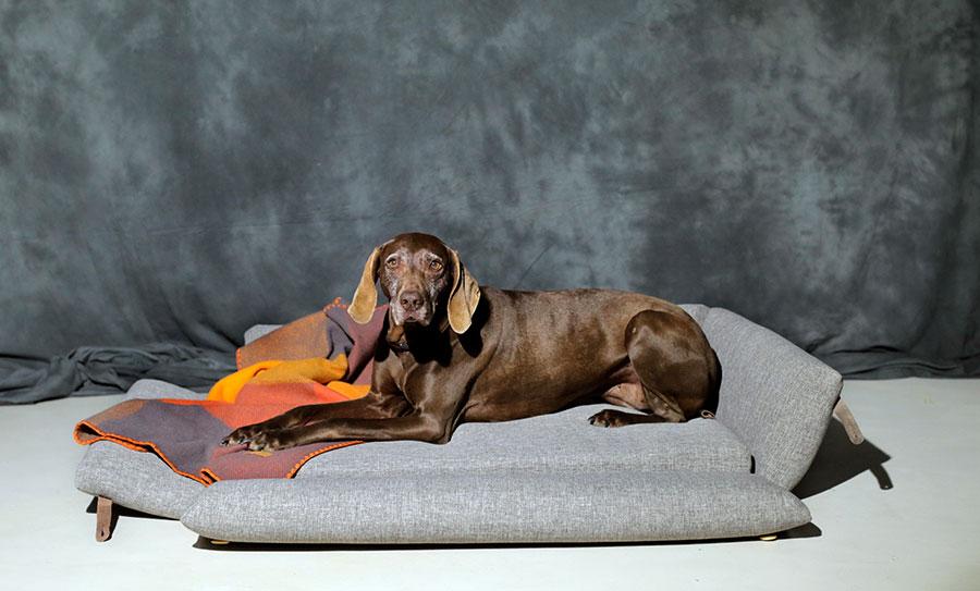 camas para perros grandes modelo Bjorn textil que se abre
