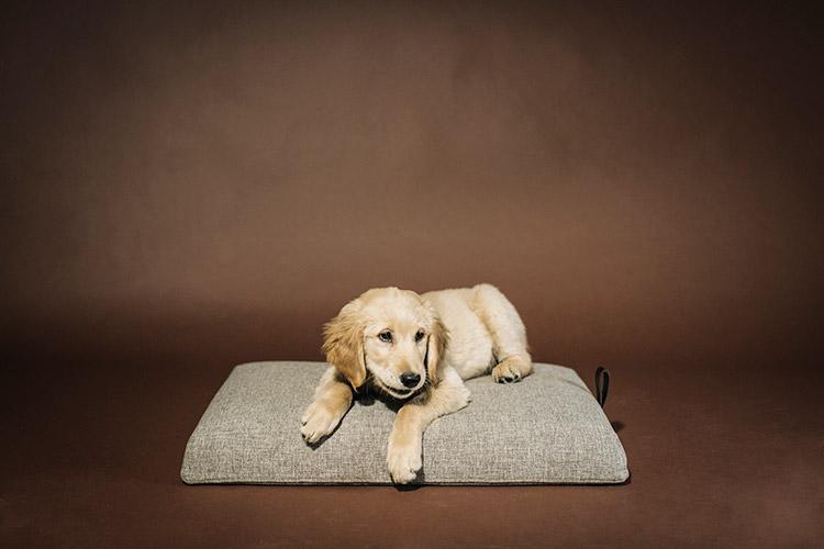 Cama para perros Norell de HANNIKO