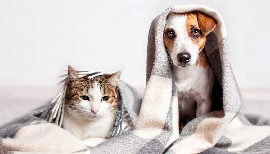 Amistad entre perros y gatos.