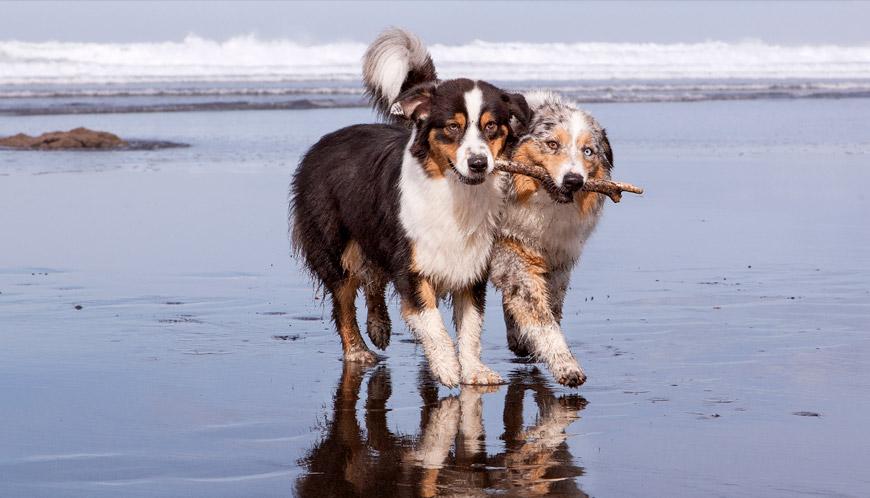 Perros jugando. Amistad entre perros