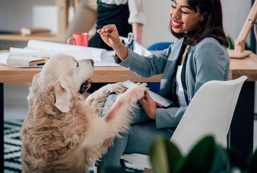 Los perros aportan felicidad en el lugar del trabajo