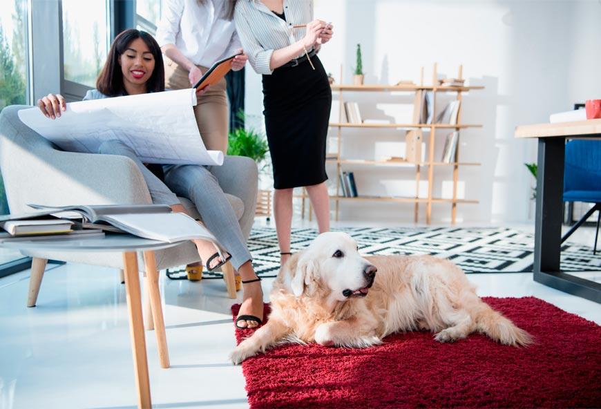 Los perros incitan a la creatividad en el lugar del trabajo