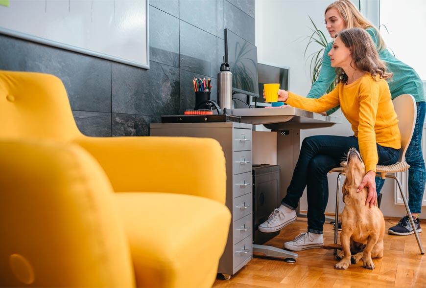 La tranquilidad de los dueños con el perro en la oficina