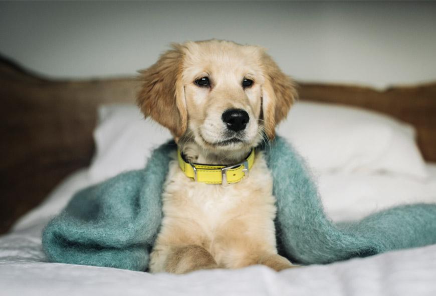 Collar para perros Egil de HANNIKO