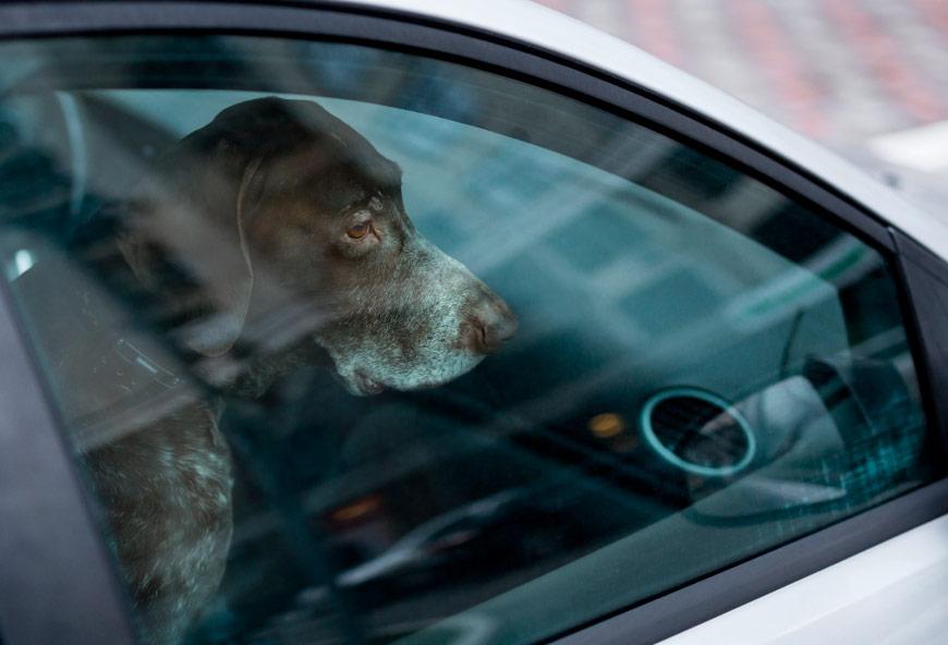 Perro encerrado en un coche en verano