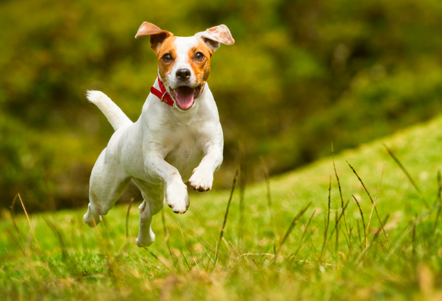 Un perro con mucha energía