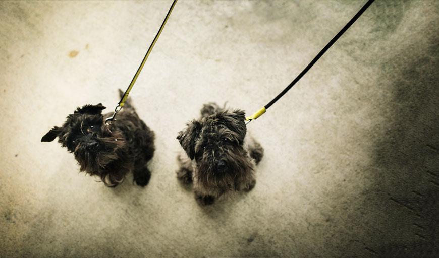 Perros con correas Loki y Valeska de HANNIKO