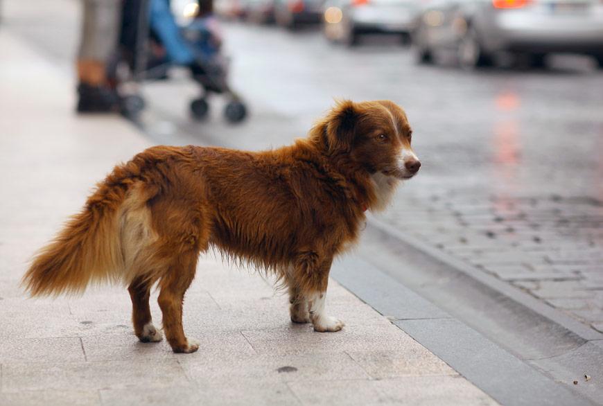 El peligro de los perros sin correa