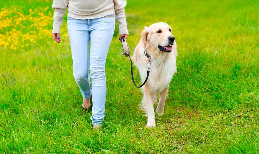 Enseñar y educar al perro mediante paseos con correa