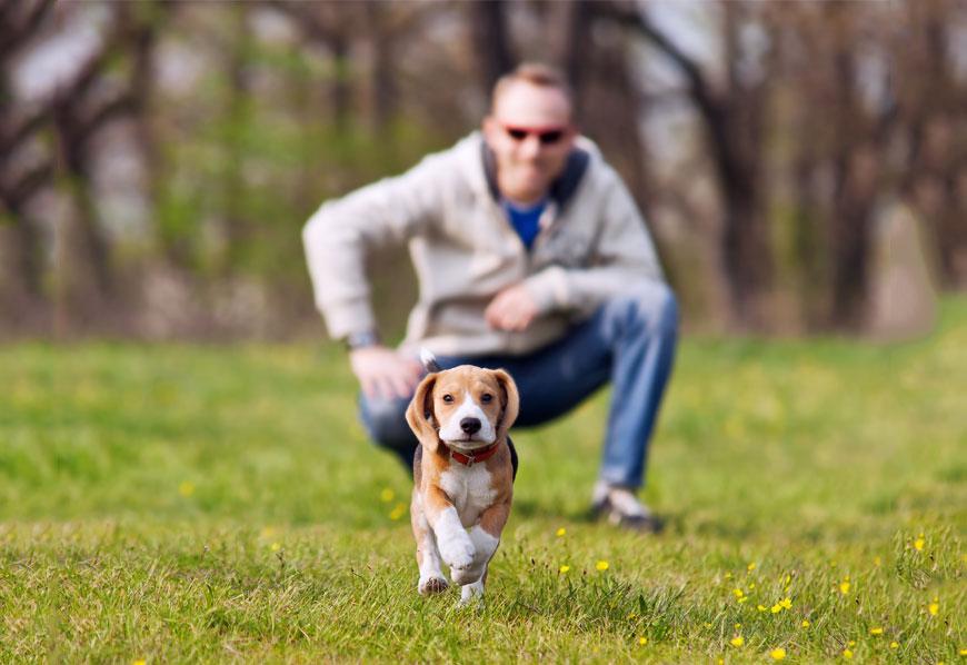 Entrena a tu perro desde que es un cachorro