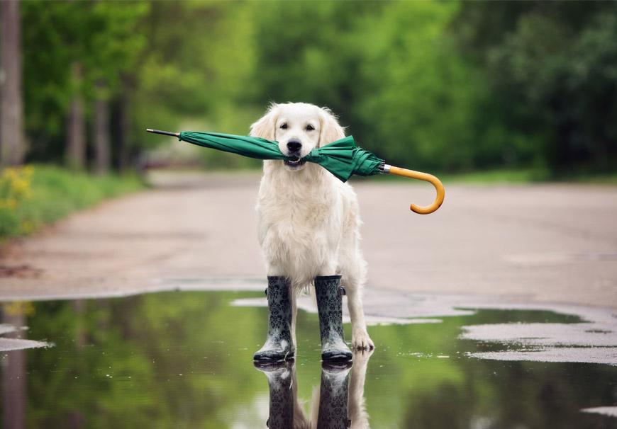 No humanices a tu perro