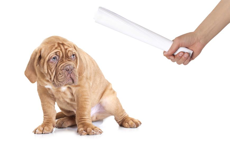 No castigues físicamente a tu perro