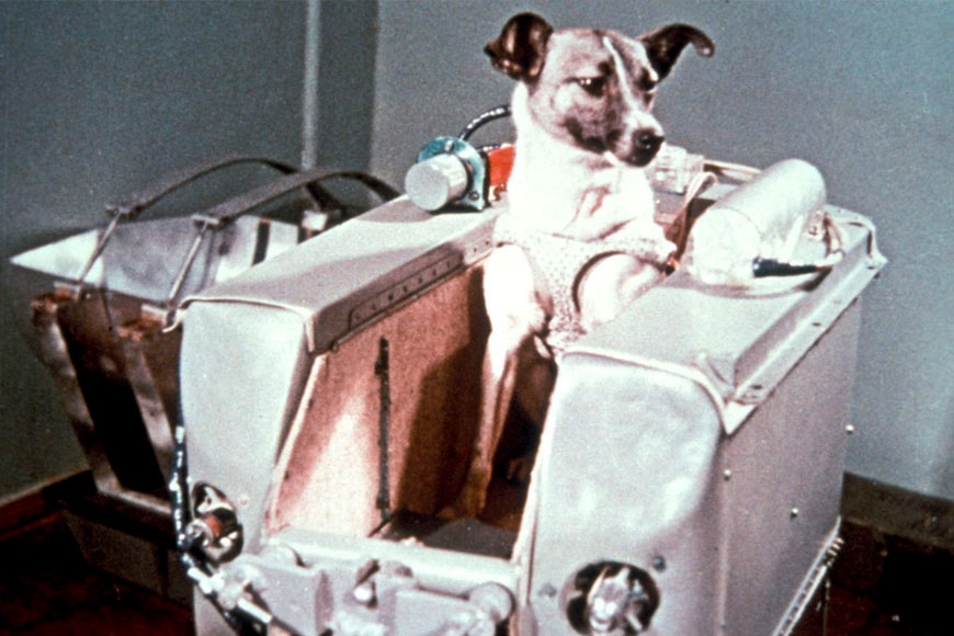 Laika el perro que enviaron los soviéticos a la Luna