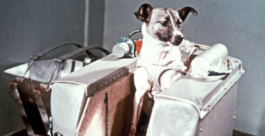 Did you know that the human being got to land on the moon thanks to a female dog? - Blog - Hanniko Design
