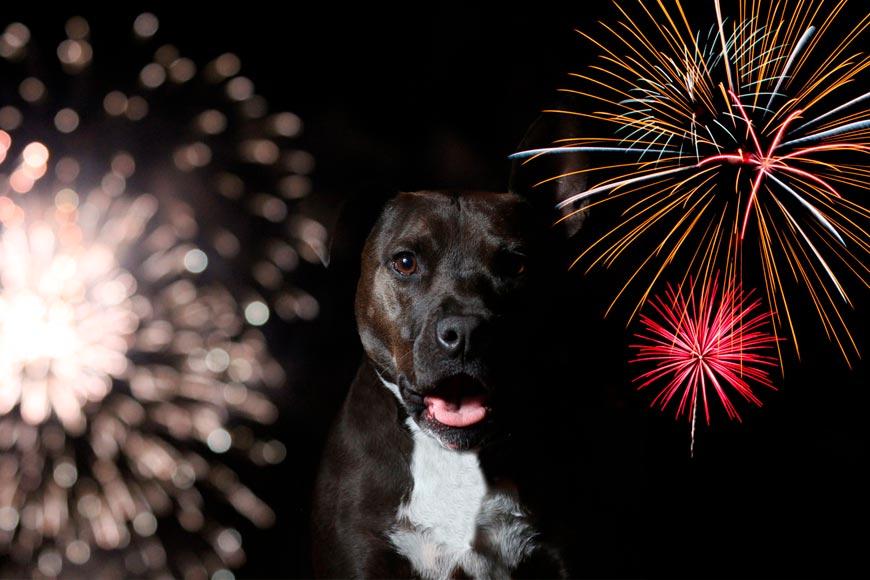 Perros con miedo a fuegos artificiales y petardos