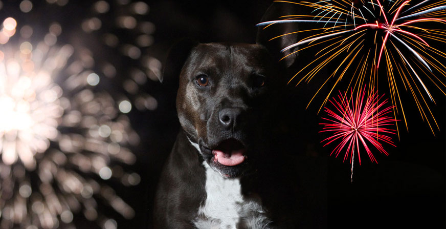 How to protect your dog from fireworks and firecrackers - Blog - Hanniko Design
