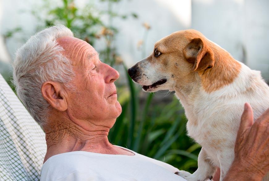 equivalencia edad perros y humanos