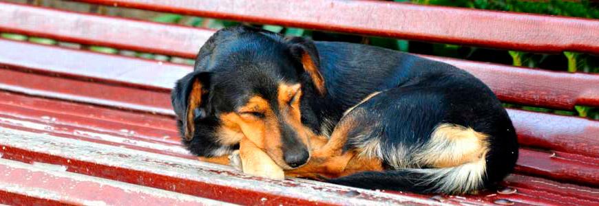 Perro dormido en postura fetal
