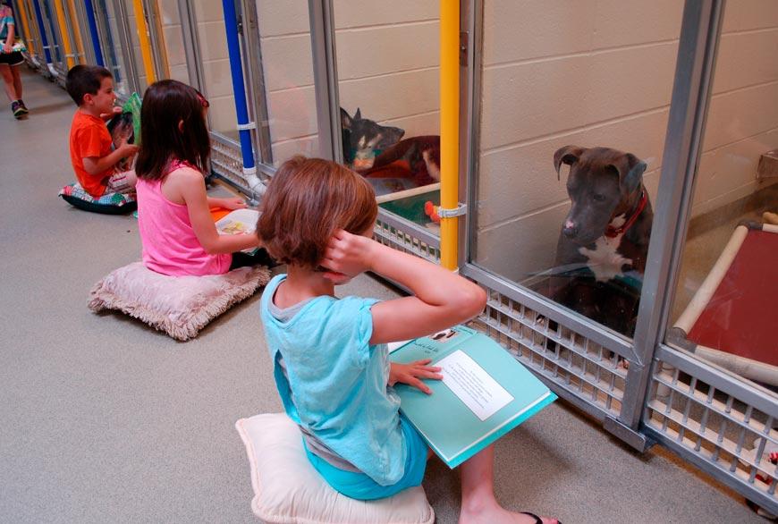Lectura de niños a perros impulsada por el Humane society of Missouri