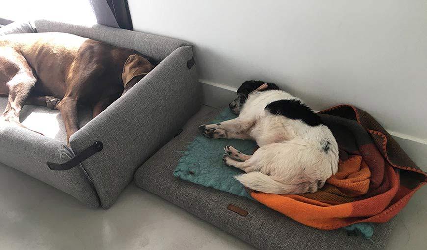 Embajadoras de Casa Hanniko dormidas, Kira cama Bjorn y Ani cama Norell