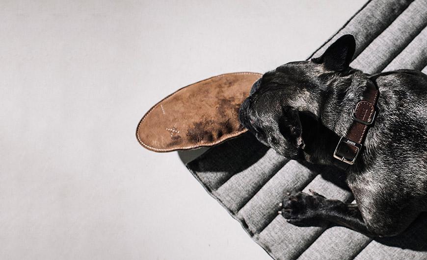 Spille juguete para perros de HANNIKO