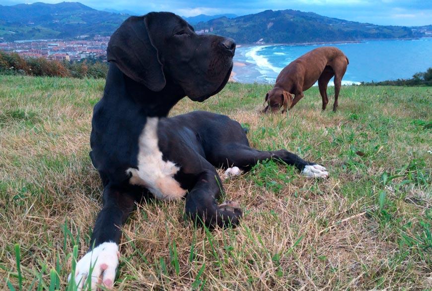 Otto y Kira en el monte. Viajar con perros en Semana Santa