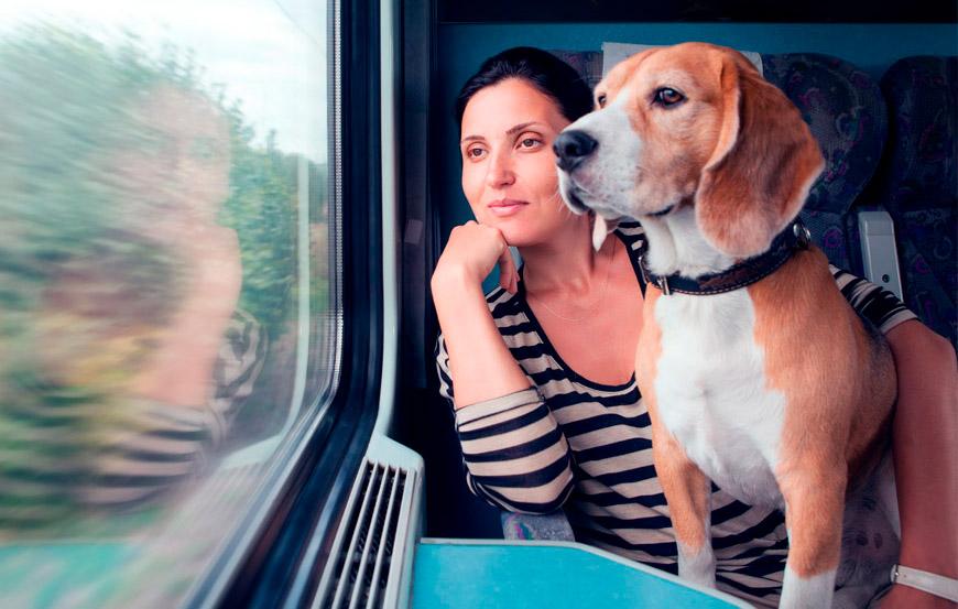 Perro viajando en tren. Viajar con perros en Semana Santa