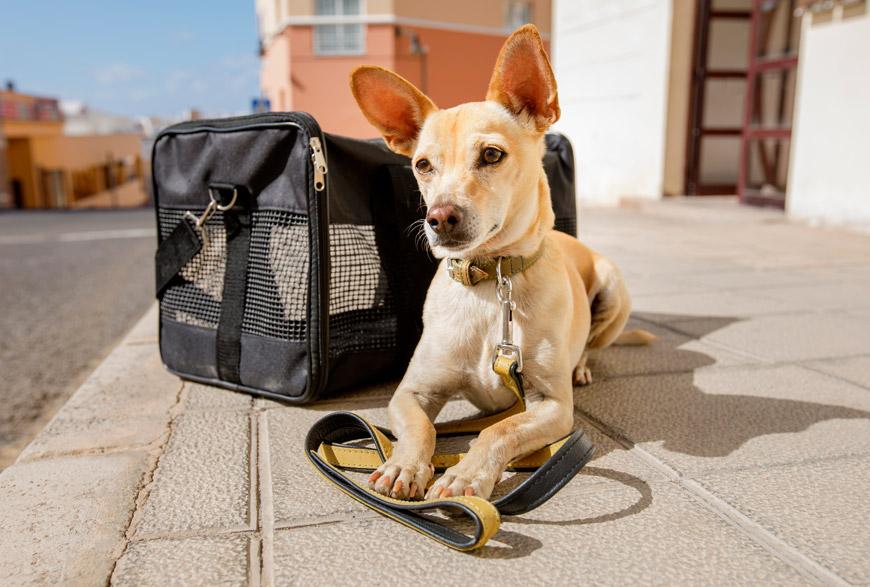 Perro y transportin. Viajar con perros en Semana Santa