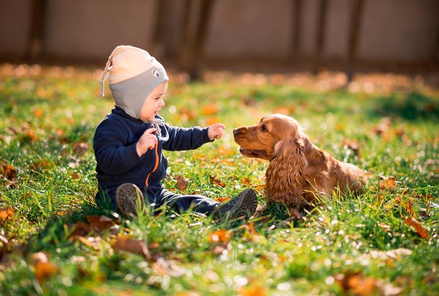 Perro y bebé conociéndose