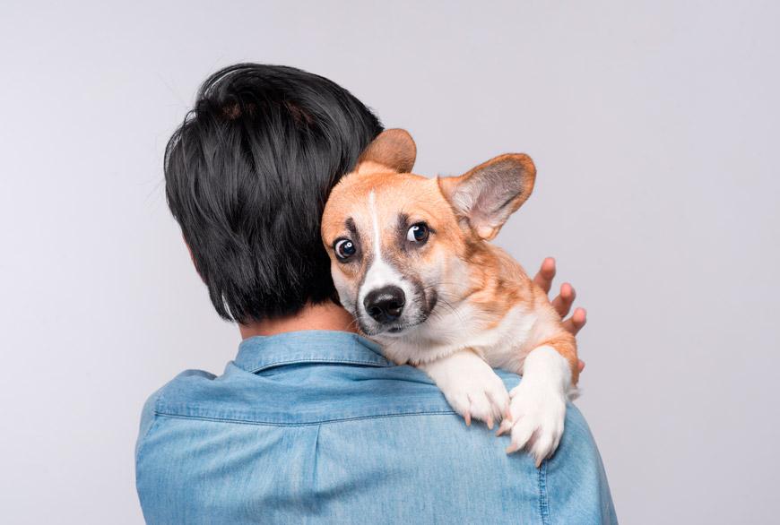 Los perros no soportan los abrazos