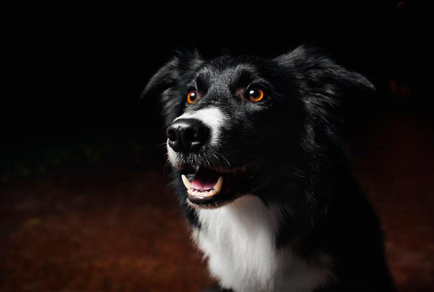 Los perros ven en la oscuridad