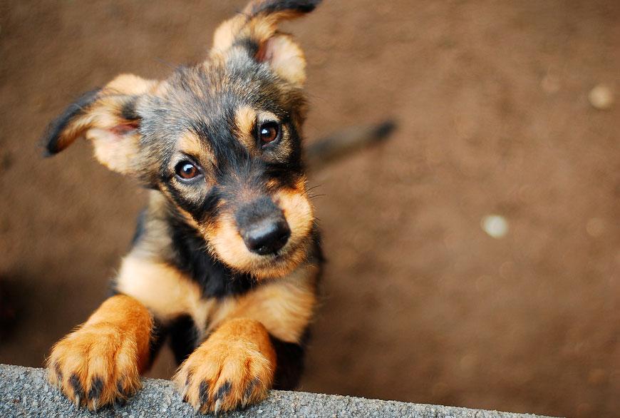 Los perros son un remedio infalible contra la soledad