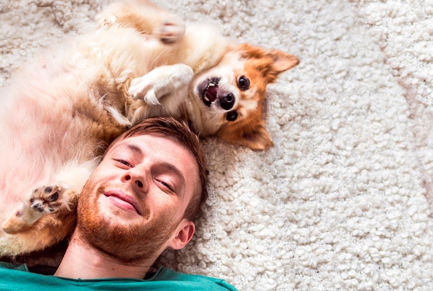 Los perros nos dan felicida