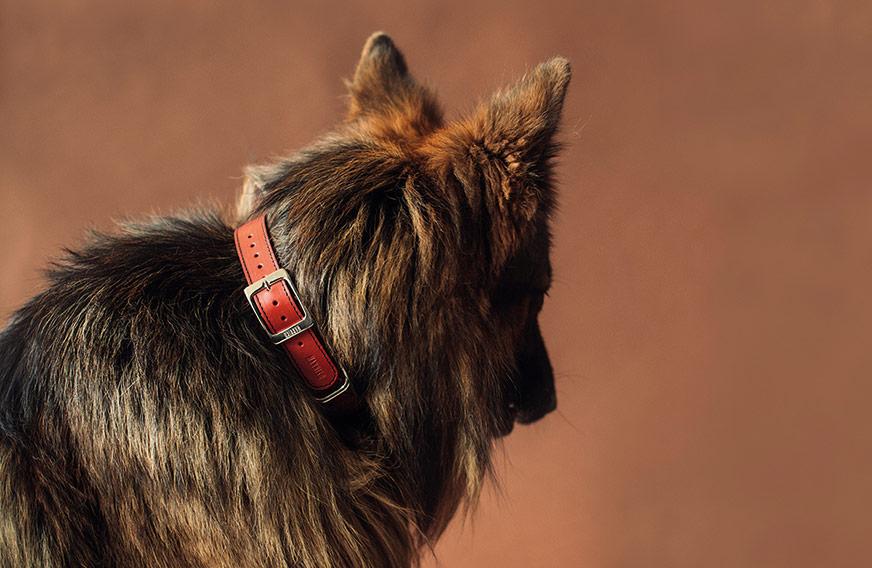 correas personalizadas para perros