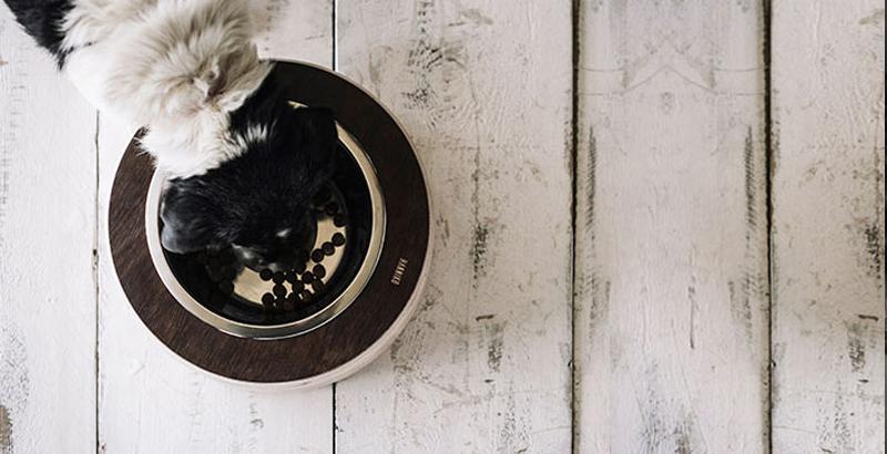 Modelo HAVARD_comedero para perros HANNIKO