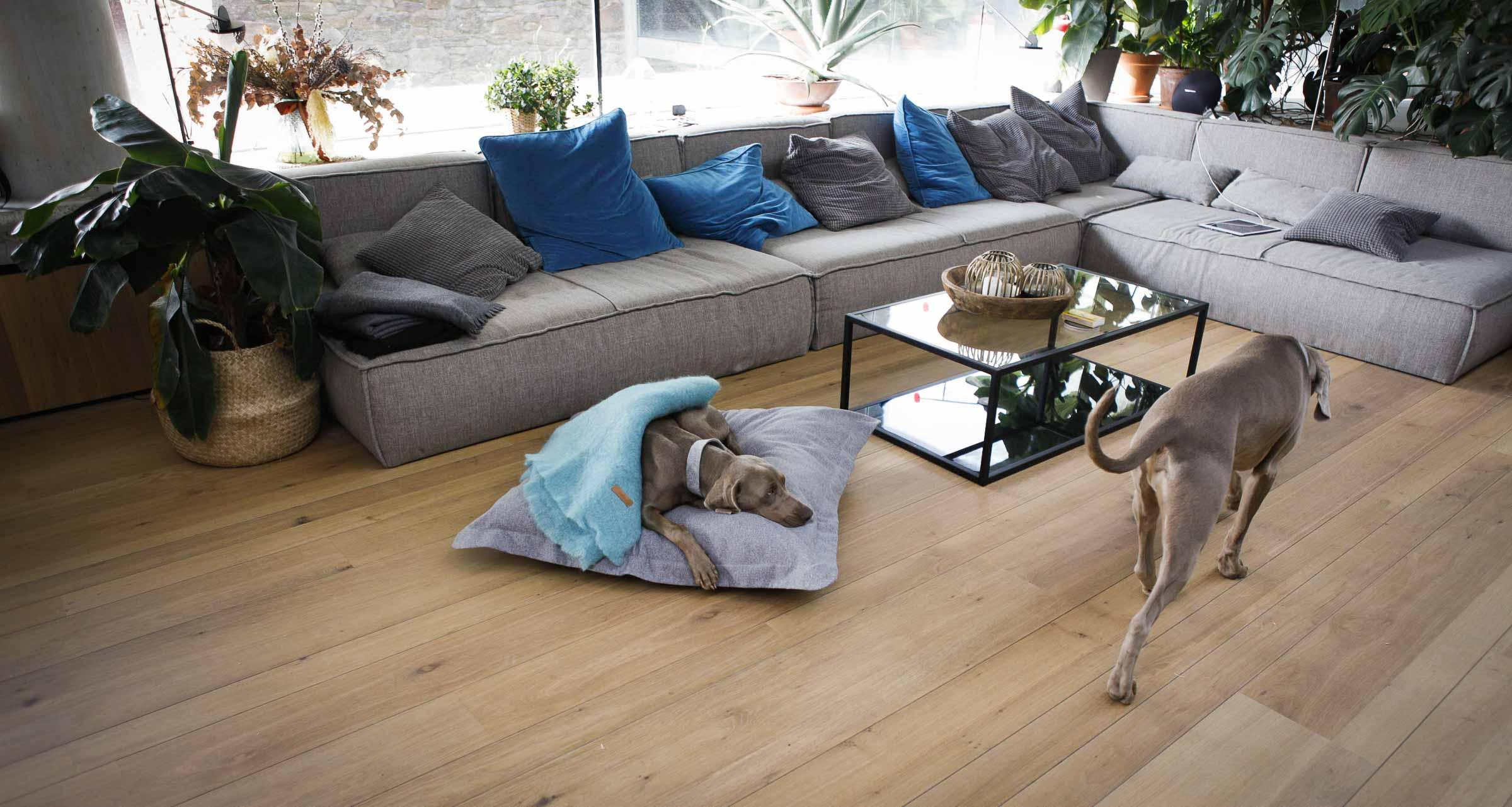Si vas a pasar estas Navidades en casa con tu perro, te va a gustar nuestra promoción - Blog - Hanniko Design